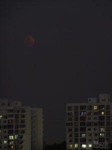 blue blood moon 1