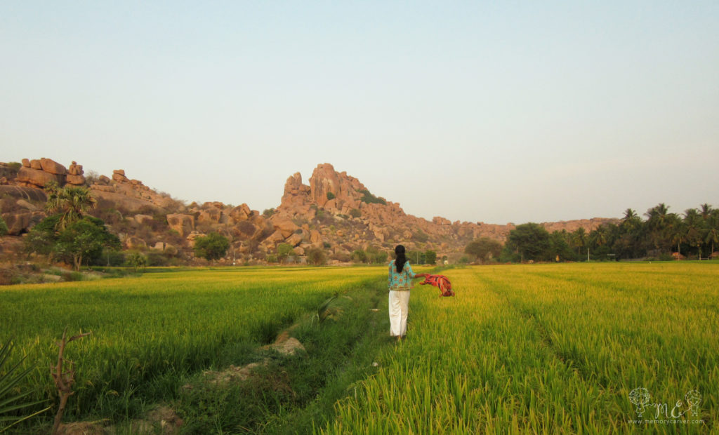 farmland that we came across near hippie island during our road trip to hampi