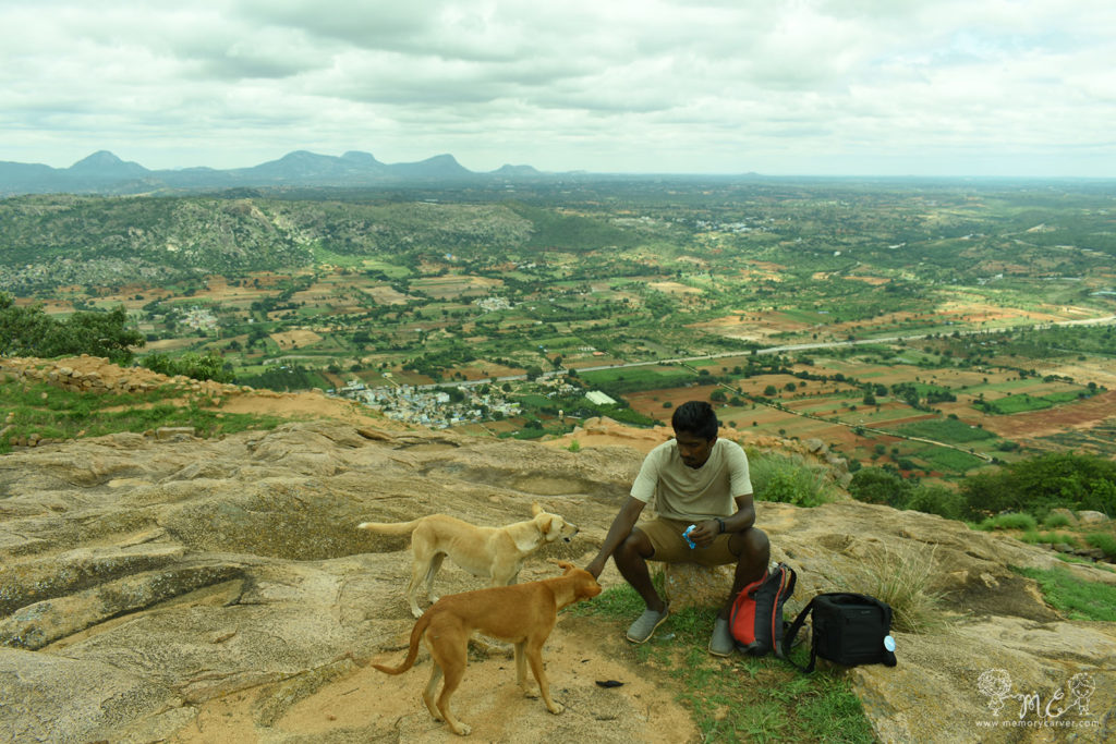 Dogs to keep us company during our trek